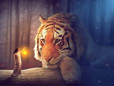 合成夜色中的女孩和巨型老虎场景