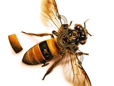 绘制机械蜜蜂